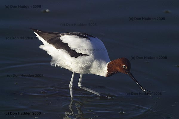 Slide Show Of Some Of My Bird Photos >> Don Hadden Nature Photography